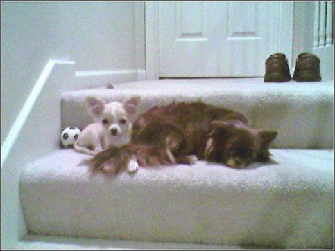 Lilo & Rikku