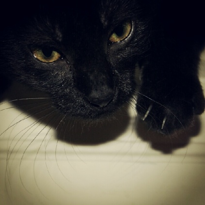 Viola the Curious Kitten
